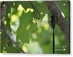 Dragonfly Acrylic Print by Zori Minkova