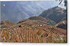Dragon S Backbone Rice Terraces Acrylic Print