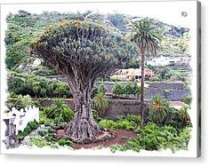 Dragon Tree Acrylic Print by Ha Ko