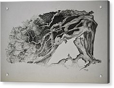 Dragon Tree With People Acrylic Print by Glenn Calloway