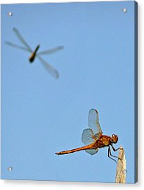 Acrylic Print featuring the photograph Dragonflies by Jim Whalen