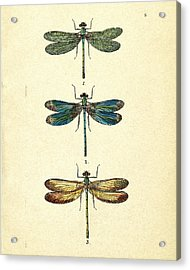 Dragonflies Acrylic Print by Pati Photography