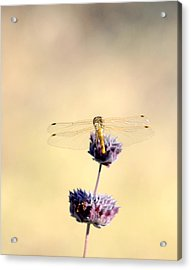 Acrylic Print featuring the photograph Dragonfly by AJ  Schibig