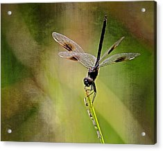 Acrylic Print featuring the photograph Dragonfly And Friends by Dawn Currie