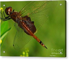 Dragonfly Art 2 Acrylic Print by Greg Patzer
