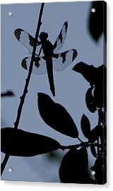 Dragonfly Blue Acrylic Print