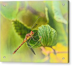 Dragonfly Days II Acrylic Print by Susan Capuano