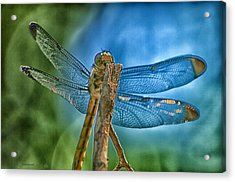 Acrylic Print featuring the photograph Dragonfly by Dennis Baswell