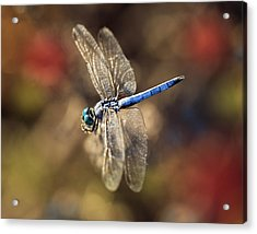 Dragonfly Floating Acrylic Print
