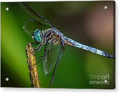 Dragonfly Having Summer Fun Acrylic Print