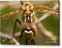 Dragonfly Head Acrylic Print by Mae Wertz