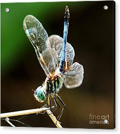 Dragonfly Headstand Acrylic Print