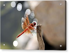 Dragonfly Highlights Acrylic Print