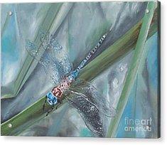 Dragonfly Acrylic Print by Irene Pomirchy
