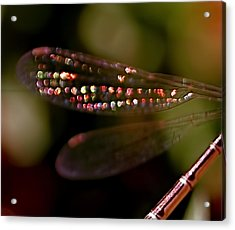 Dragonfly Jewels Acrylic Print by Rona Black