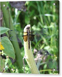 Acrylic Print featuring the photograph Dragonfly by Karen Silvestri
