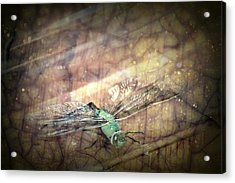 Dragonfly Leap Of Faith Acrylic Print by Dawna Morton