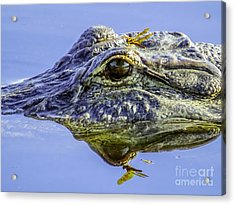 Dragonfly On The Alligator Eye Acrylic Print