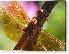 Dragonfly Patterns Acrylic Print