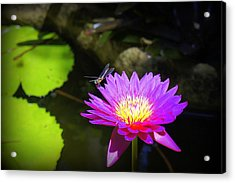 Acrylic Print featuring the photograph Dragonfly Resting by Laurie Perry