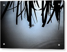 Dragonfly Silhouette Acrylic Print