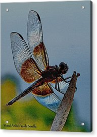 Dragonfly Sky Print Acrylic Print