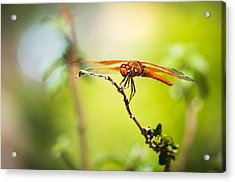 Acrylic Print featuring the photograph Dragonfly Smile by Priya Ghose