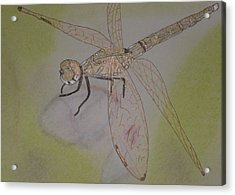 Dragonfly Visitor Acrylic Print by Marcia Weller-Wenbert
