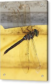 Acrylic Print featuring the photograph Dragonfly Web by Melanie Lankford Photography