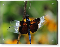 Acrylic Print featuring the photograph Dragonfly Zoom by Robert  Moss