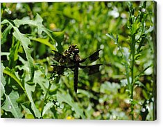 Acrylic Print featuring the photograph Dragonflyongreenery by Robert  Moss