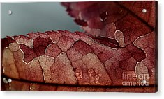 Acrylic Print featuring the photograph Dragon's Spine by Kenny Glotfelty