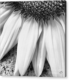 Drained And Still Beautiful Acrylic Print