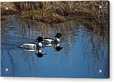Drakes A Pair Acrylic Print by Skip Willits