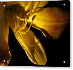 Dramatic Lily Acrylic Print