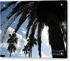 Acrylic Print featuring the photograph Dramatic Palm by Jeanne Forsythe