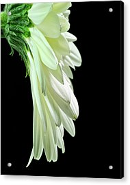 Acrylic Print featuring the photograph Drape by Art Barker