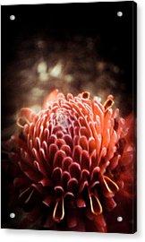Dream In Bloom - Orange  Acrylic Print