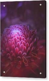 Dream In Bloom - Pink Acrylic Print