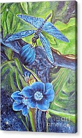Dream Of A Blue Dragonfly Acrylic Print by Kimberlee Baxter