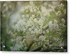 Dream Of Spring Acrylic Print