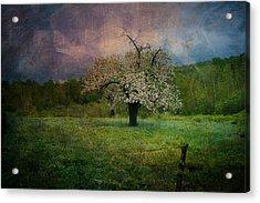 Dream Of Spring Acrylic Print