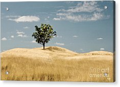 Dream Tree Acrylic Print by Scott Pellegrin