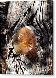 Dream Tree Shin Acrylic Print