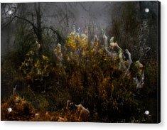 Dream Weavers Acrylic Print