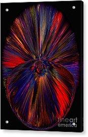 Dreamcatcher  Acrylic Print by Patricia Kay