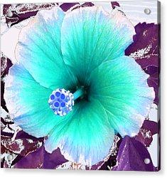 Dreamflower Acrylic Print