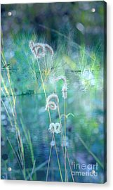 Dreaming In Blue Acrylic Print by Carol Groenen