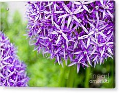 Acrylic Print featuring the photograph Dreaming by Maria Janicki