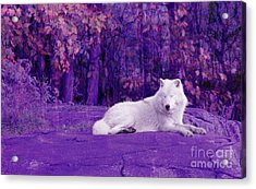Dreaming Of Another World Acrylic Print by Vicki Spindler